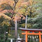 桜木神社紅葉