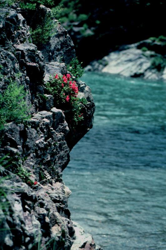 宮滝の岩つつじ