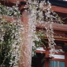 水分神社 (1)