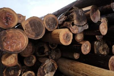 樽丸になるための「原木」